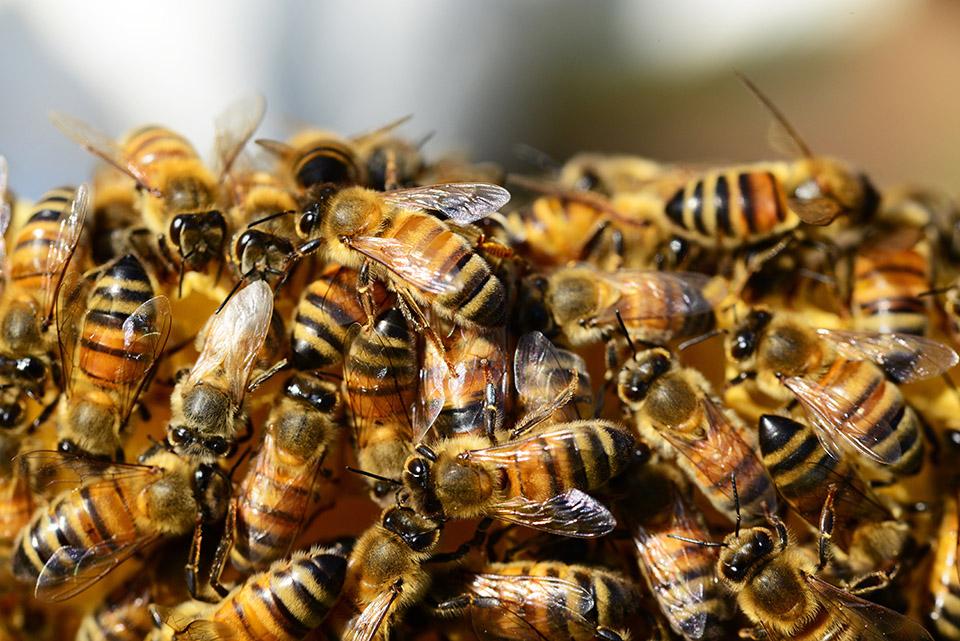 Como solucionar los problemas de las colmenas de abejas